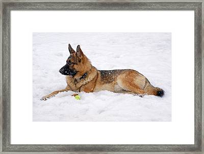 Dog In Snow Framed Print by Sandy Keeton
