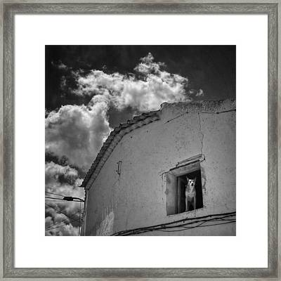Dog In The Window #dog #pets #animals Framed Print