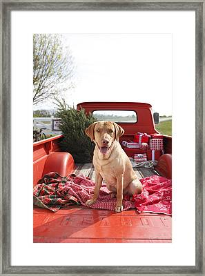 Dog In Truck Bed With Pine Tree Outdoors Framed Print