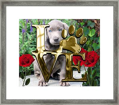 Dog Lover Collection Weimaraner Dog Puppy Framed Print by Marvin Blaine
