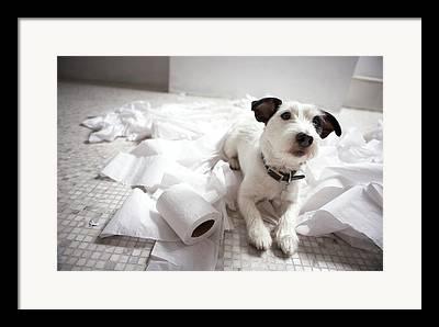 Dog Lying Down Framed Prints