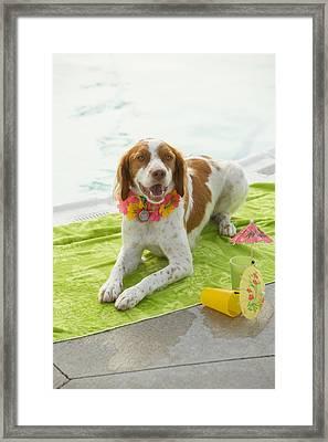 Dog Lying On Beach Towel Framed Print by Gillham Studios