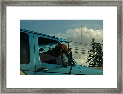 Dog Of A Day Framed Print by Robert Evans