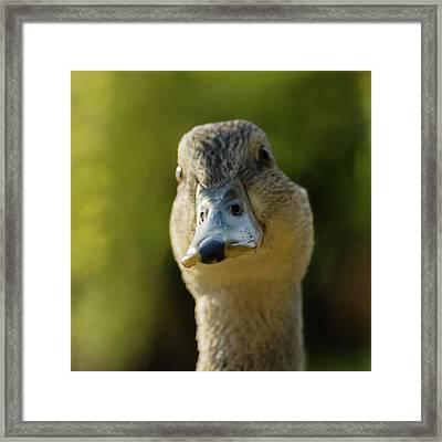 Dog On A Duck Framed Print