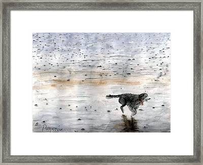 Dog On Beach Framed Print