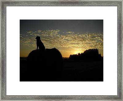 Dog On Hay Greeting Sunrise Framed Print