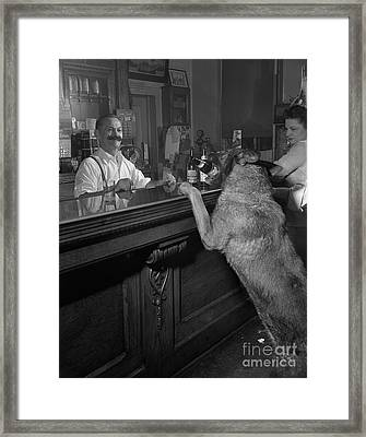 Dog Ordering A Beer Framed Print by The Harrington Collection