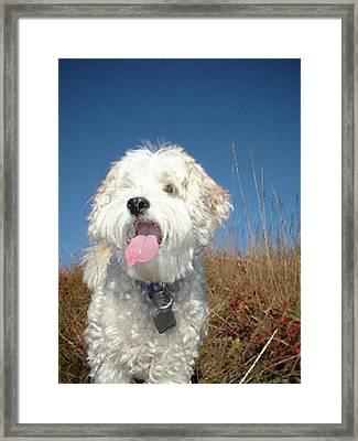 Dog Paintings Dog Oil Paintings Dog Art Dog Prints - Buddy Framed Print by Frances Leigh