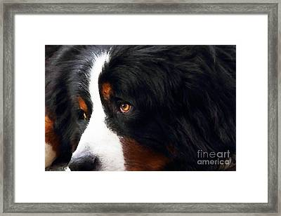 Dog . Photo Artwork Framed Print by Wingsdomain Art and Photography