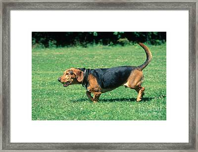 Dog Playing With Ball Framed Print