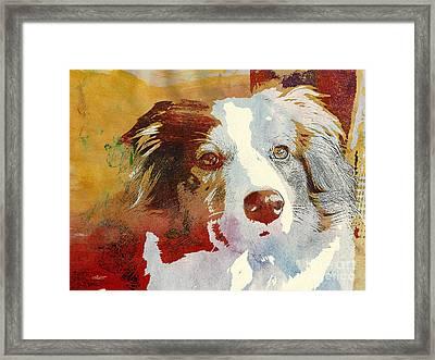 Dog Portrait Framed Print by Jutta Maria Pusl