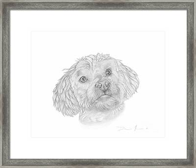 Dog Portrait Marsh Mellow Framed Print