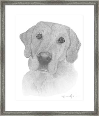 Dog Portrait Webster Framed Print