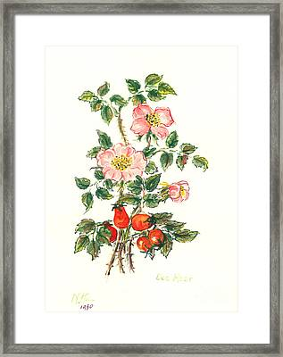 Dog Rose Framed Print by Nell Hill