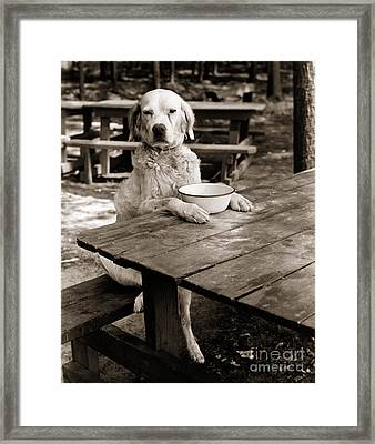 Dog Sitting At Picnic Table, C.1930s Framed Print by H. Armstrong Roberts/ClassicStock