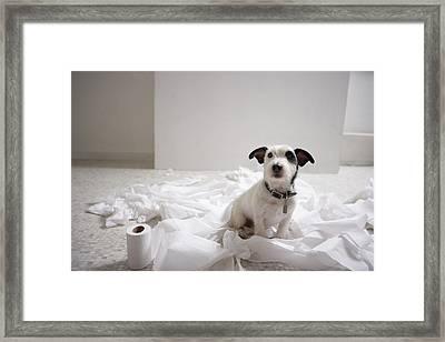 Dog Sitting On Bathroom Floor Amongst Shredded Lavatory Paper Framed Print by Chris Amaral
