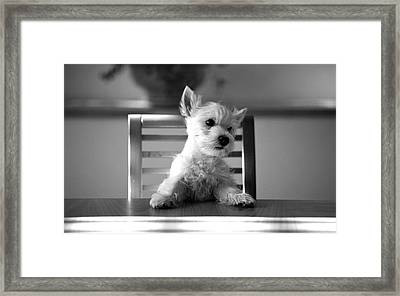 Dog Sitting On The Table Framed Print