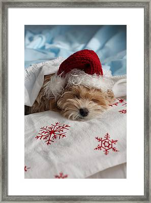 Dog Sleeping In Bed With Santa Hat Framed Print