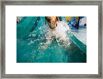 Dog Splashing In Water Framed Print