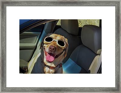 Dog Tested Framed Print by David Litman