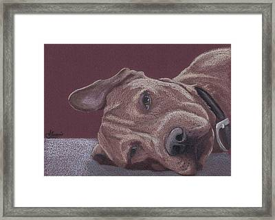 Dog Tired Framed Print by Stacey Jasmin