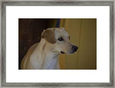 Dog Tuned Observer  Framed Print