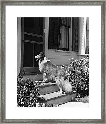 Dog Waiting To Be Let In To House Framed Print