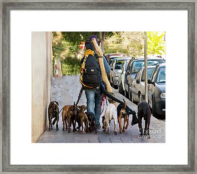Dog Walker Framed Print by Juli Scalzi
