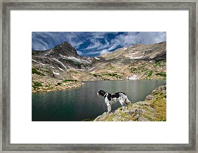English Setter With A View Framed Print by Flying Z Photography By Zayne Diamond