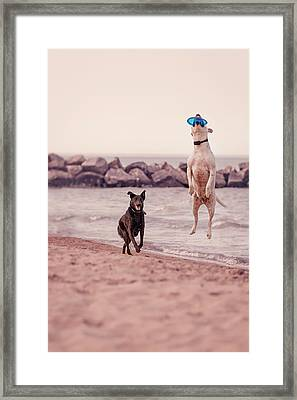 Dog With Frisbee Framed Print