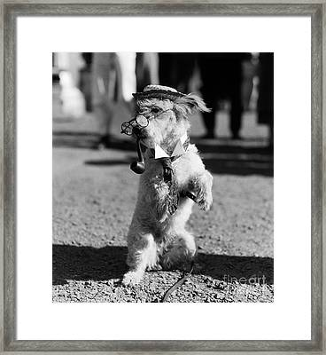 Dog With Glasses, Pipe, Etc., C.1940s Framed Print by H. Armstrong Roberts/ClassicStock