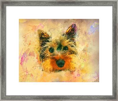 Dog Yorkshire Terrier Art Framed Print