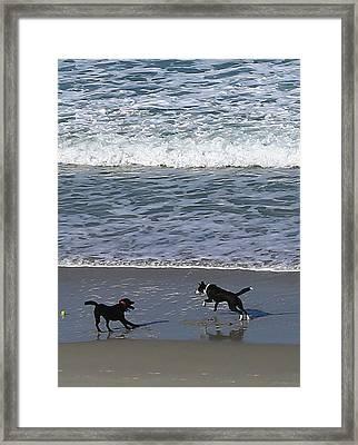 Framed Print featuring the photograph Doggie Fun by Nareeta Martin
