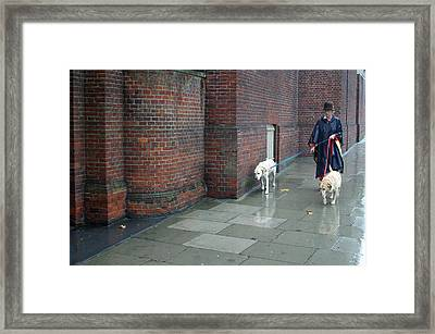 Doggie  Strolling 2 Framed Print by Jez C Self