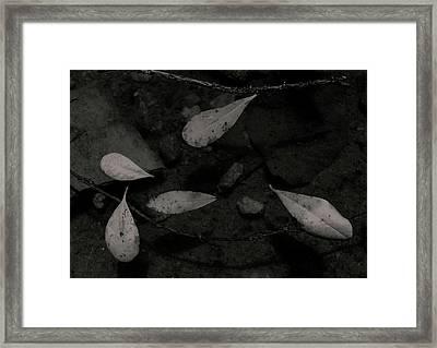 Foglie Morte Framed Print