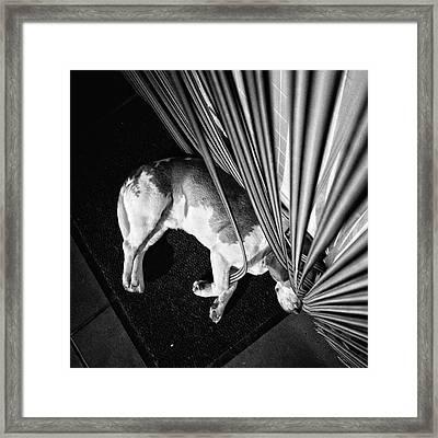 Dog.net  #dog #animal #pet #instadog Framed Print
