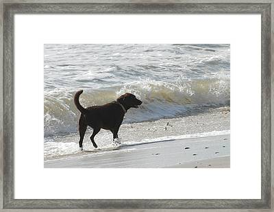Dogs 43 Framed Print by Joyce StJames