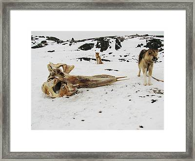 Dogs And The Whale Framed Print by Sidsel Genee