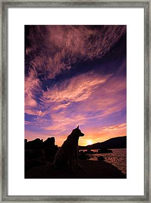 Dogs Dream Too Framed Print by Sean Sarsfield