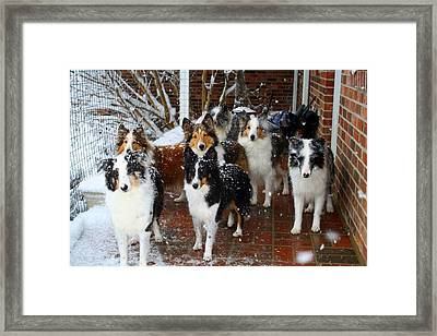 Dogs During Snowmageddon Framed Print