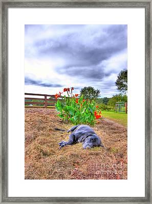 Dog's Life Framed Print by Ted Reynolds