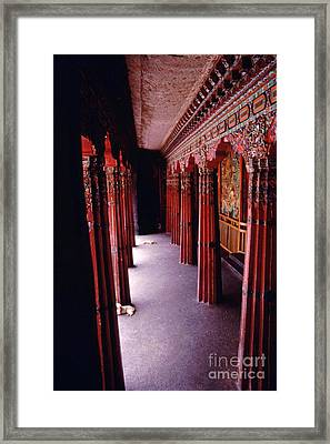 Dogs On Sera Monastery Porch - Lhasa Tibet Framed Print
