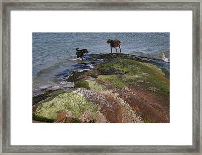 Dogs On The Rocks Framed Print by Rose Martin
