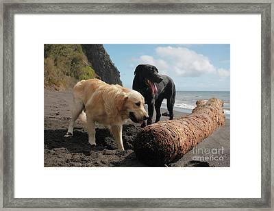 Dogs Playing At The Beach Framed Print by Gaspar Avila