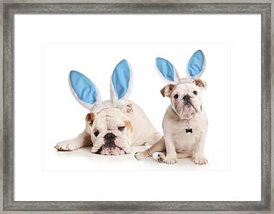 Dogs Playing Bunny Framed Print