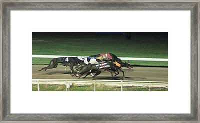 Dogs Racing Framed Print by Tom Conway