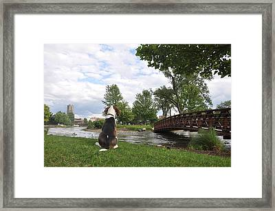 Dog's View Framed Print