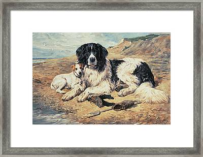 Dogs Watching Bathers Framed Print by John Emms