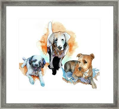 Dogs#1 Framed Print by Rafal Wnek
