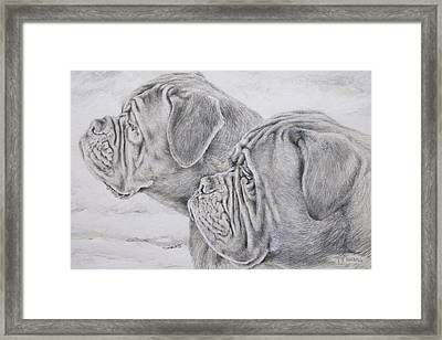 Dogue De Bordeaux Framed Print by Keran Sunaski Gilmore